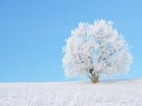 Verschneiter Baum in einer winterlichen Landschaft