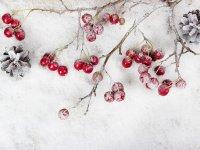 Vereiste Beeren an Zweigen